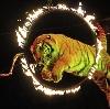 Цирки в Ростове