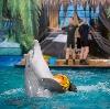 Дельфинарии, океанариумы в Ростове