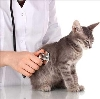 Ветеринарные клиники в Ростове
